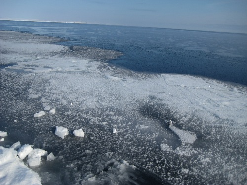 New ice (uiguaq) forming along the floe edge in Cumberland Sound (May, 2009; G. Laidler).