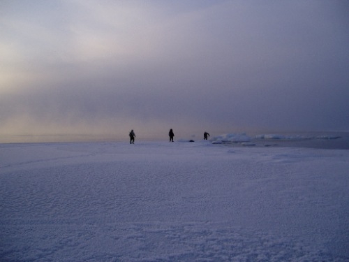 Collecting seaweed at the winter floe edge (Tellik Inlet near Cape Dorset, January, 2005; G. Laidler)