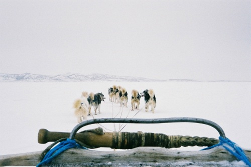 Travelling by dog team with Huit Huit tours, on the sea ice outside of Cape Dorset (April, 2004; G. Laidler).